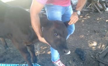 CRP: Tras el robo en un campo de Pirovano, se logró un allanamiento positivo en Urdampilleta