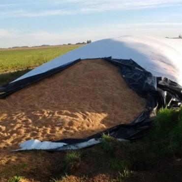 Comisario Mayor de la Coordinadora de Seguridad Rural de Pehuajó informó a Radio Urdampilleta sobre el robo de trigo en la zona rural de Henderson