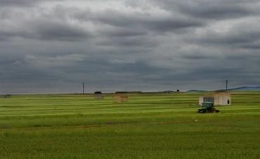 Las lluvias tuvieron marcas similares en las distintas zonas rurales del Partido de Bolívar