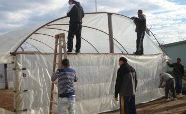 Unidad 17: Trabajan en una huerta bajo nylon