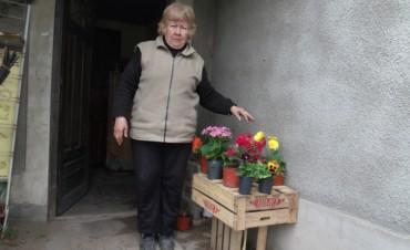 Llegó la primavera y 'Vivero Claveles' te propone hermosas plantas y flores