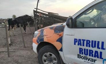 'CPR Bolívar': Una cmisión policial hizo entrega de un animal vacuno extraviado en inmediaciones a Pirovano