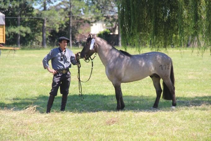 Luis Molina: 'Criar y entrenar caballos criollos es lo que más me gusta hacer'