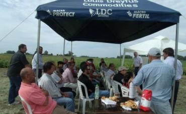 Jornada a Campo de Fiagro, Catalpa, INTA y Macro Seed: los ingenieros agrónomos aseguran que en la próxima campaña se volverá a sembrar trigo