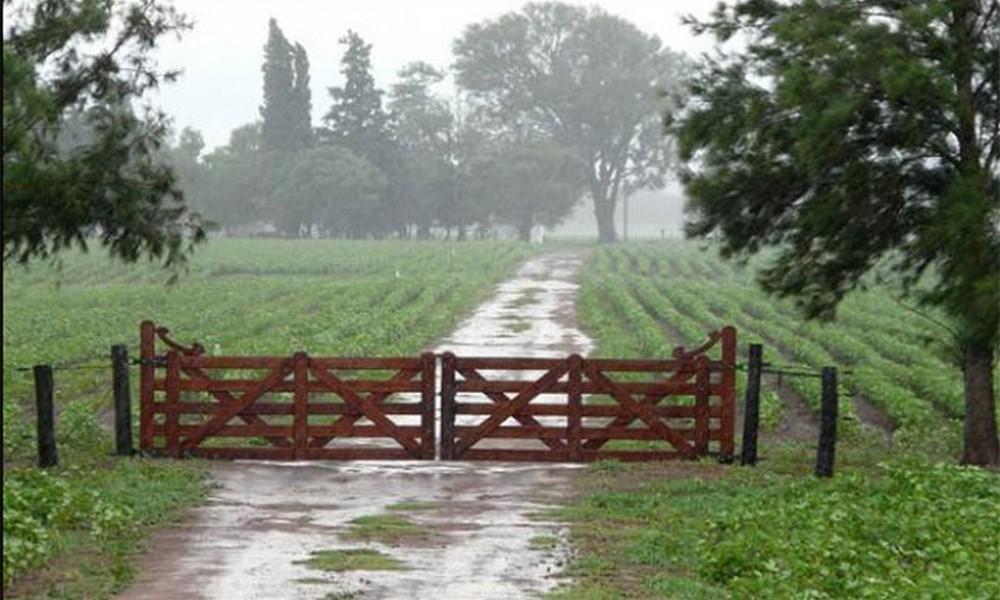 La lluvia trajo alivio a los cultivos y se dieron registros dispares en el partido de Bolívar y la provincia
