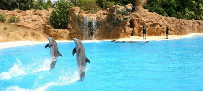 Día Mundial de los Delfines en Cautiverio