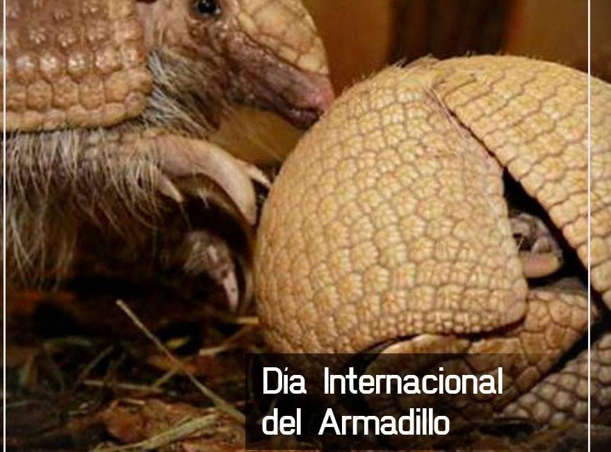 Día Internacional del Armadillo