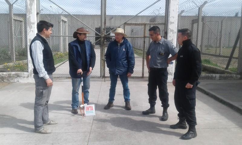 Donación de plantines de frutilla al programa pro huerta por parte de la Unidad Penitenciaria N° 17