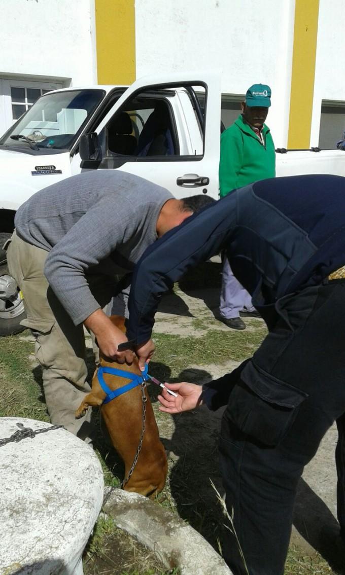 Se realizó la Campaña de Vacunación Antirrábica en Urdampilleta