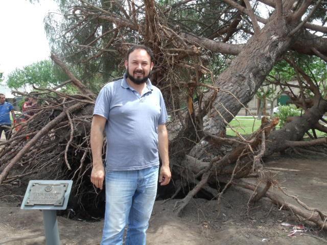 El pino de San Lorenzo se podara, se levantara sin la copa y se realizara una escultura con la madera